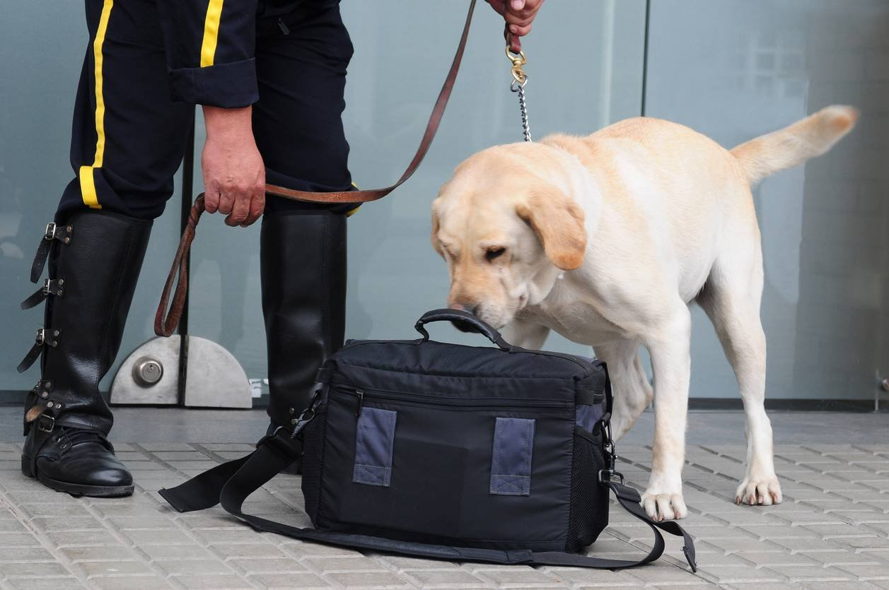 Why use an NSI approved security dog handling company?